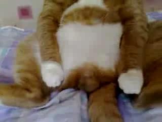 Кот смотрит мультфильм про Винни Пуха :-DD